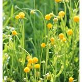 Gummibärchenblume