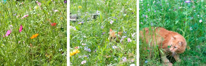 Keimzeit Wunderwiese