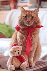 Hupf wünscht Frohe Weihnachten