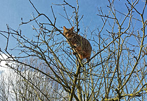 Lancelot im Apfelbaum