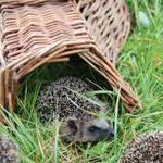 Hier finden Sie alle Artikel, mit denen Sie den Tieren in Ihrem Garten Unterschlupf und Futter bieten können (beispielsweise Nisthöhlen, Futterhäuschen, Insektenhotels)