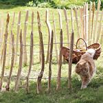 Hier finden Sie Zäune und Spaliere für Ihre Kletterpflanzen
