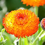 Gestalten mit Orange