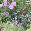 Wunderwiese 'Bienenglück'