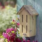 A596 Schmetterlingshaus