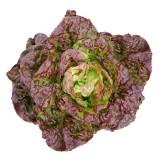 G104 Kopfsalat 'Merveille de Quatres Saisons' BIO