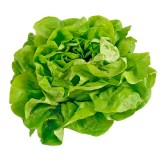 G105 Kopfsalat 'All Year Round' BIO