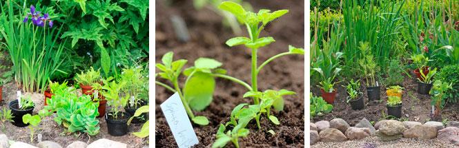 Keimzeit neue Saatgutzucht
