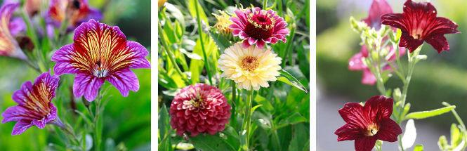 Neue Blüten im Testgarten