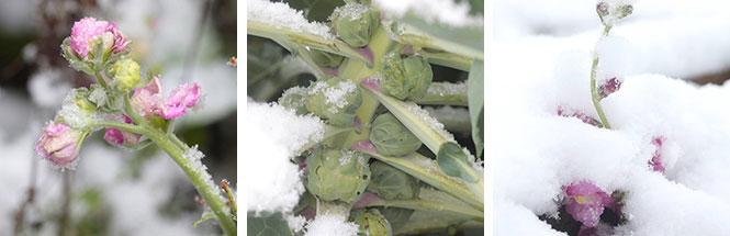 Erster Schneefall bei Keimzeit