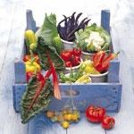 NEU: Gemüse