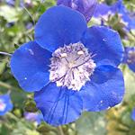 Gestalten mit Blau