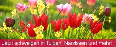 Zum Tulpen-und Blumenzwiebelsortiment